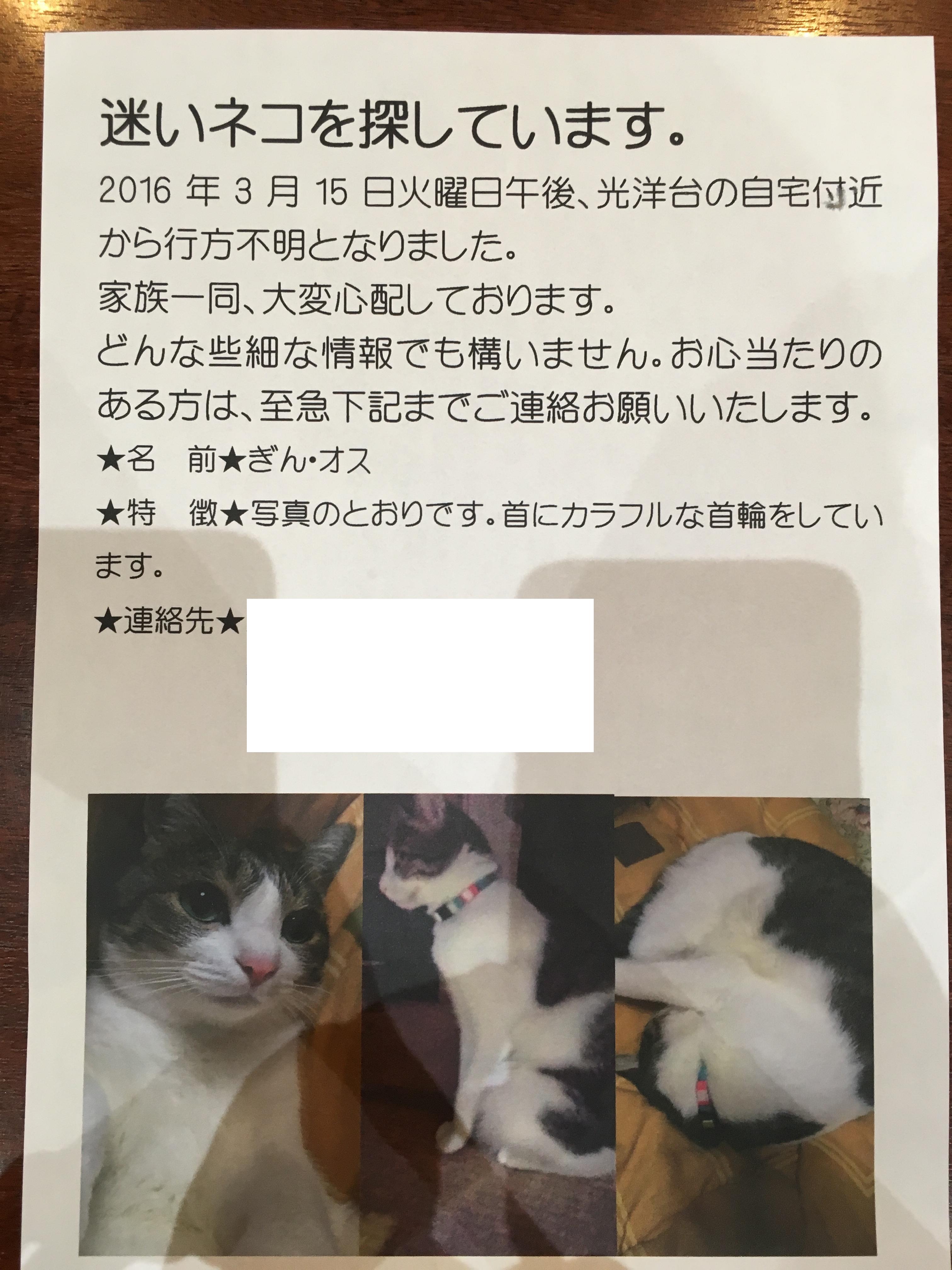 ネコちゃんを探しています。