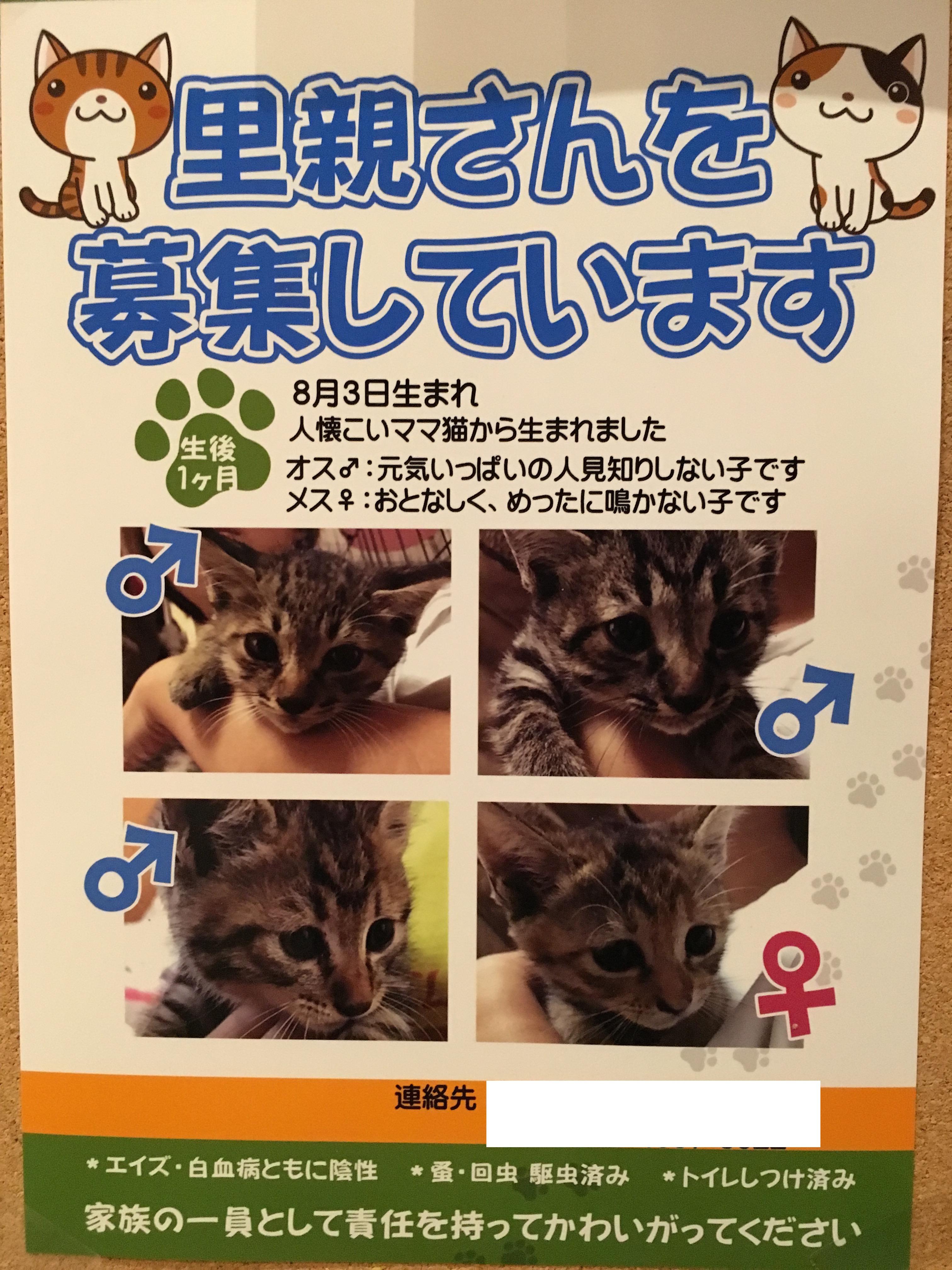 仔猫ちゃんの新しい飼い主様を募集しています。