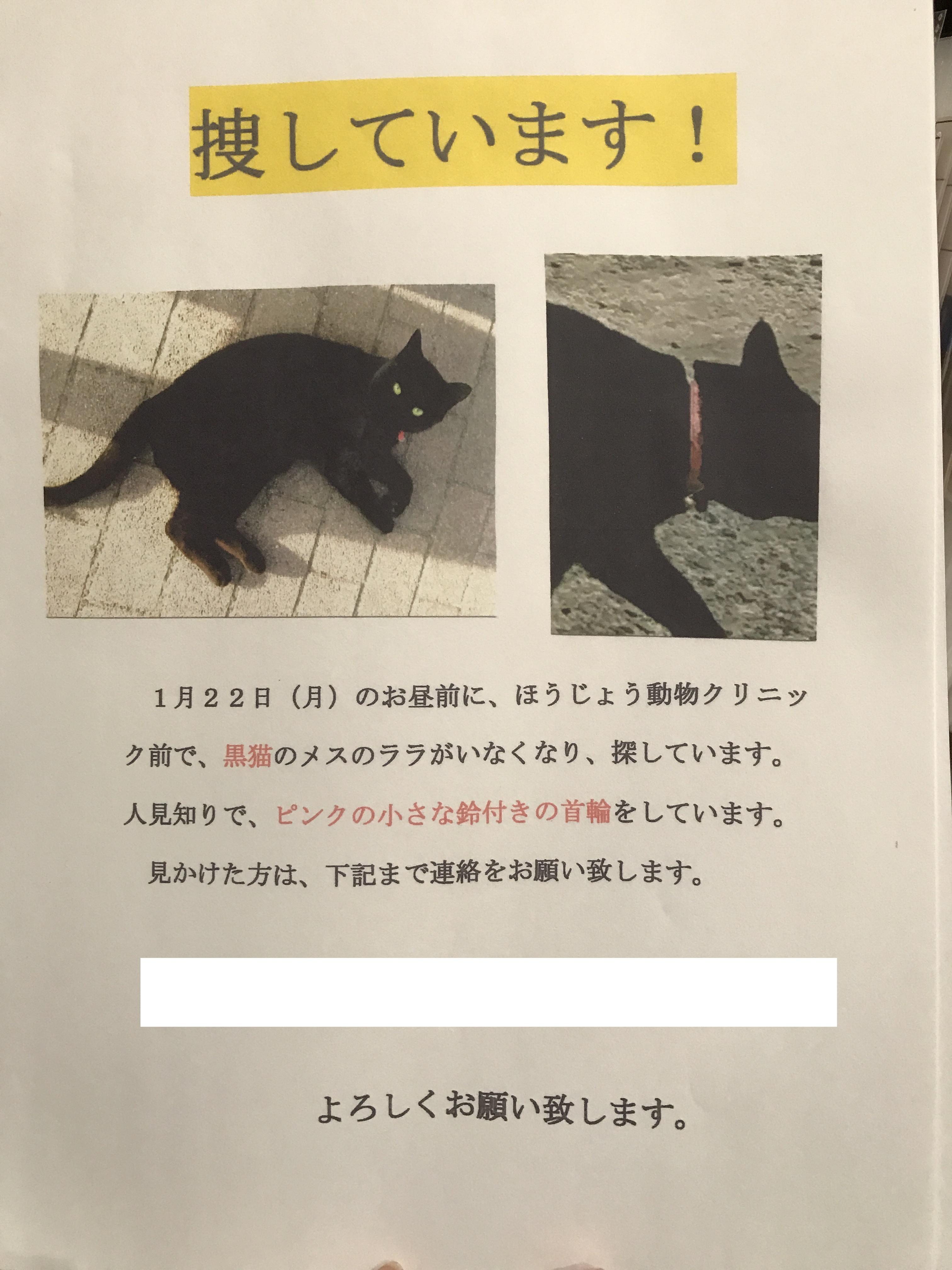 猫ちゃんが迷子です。