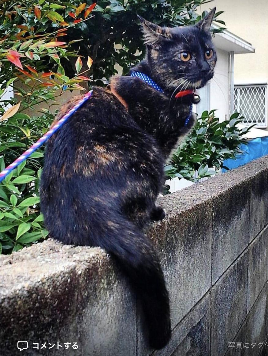 迷子の猫ちゃん見つかりました!